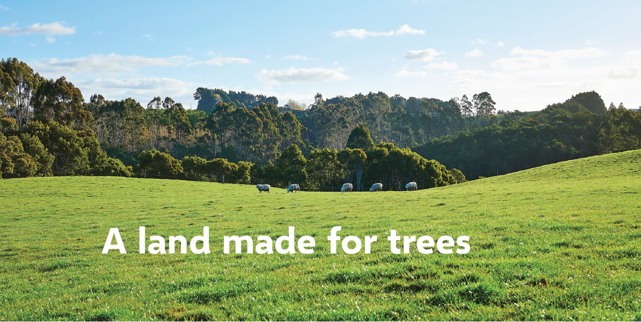 Forests, Timber, Macrocarpa, Tasmanian Blackwood, Eucalyptus, Victorian Ash, Sydney Blue Gum